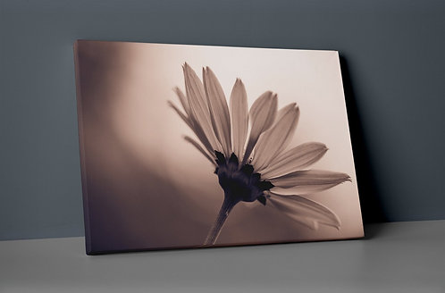 Flower Canvas Printings