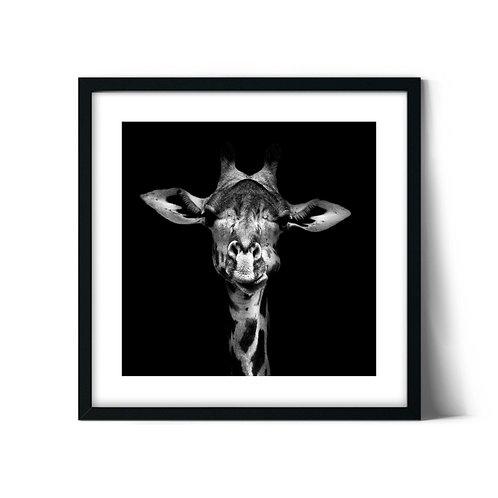 Giraffe Framed Painting