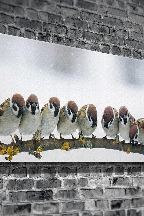 Birds  Canvas Printings
