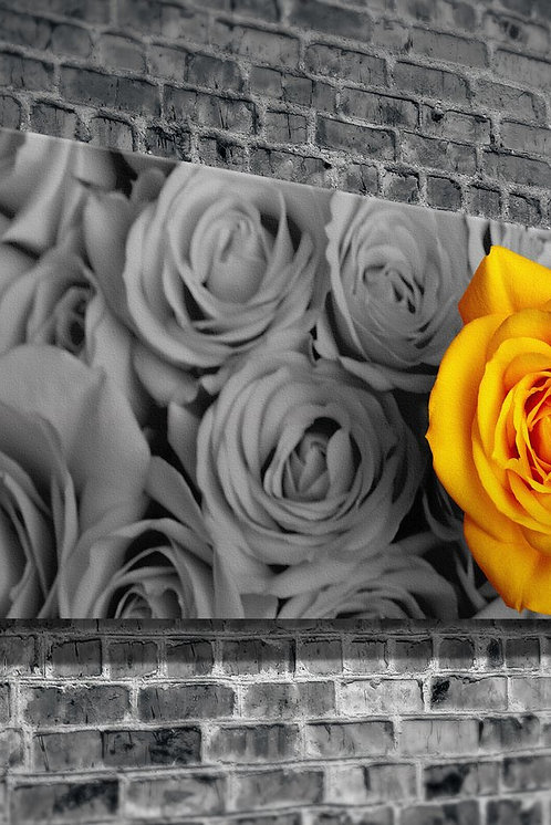Yellow Rose  Canvas Printings
