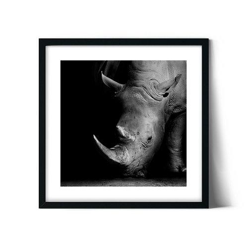 Rhino Framed Painting