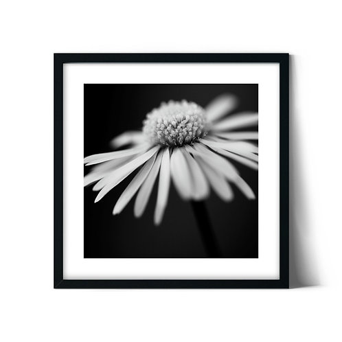 Daisy Framed Painting
