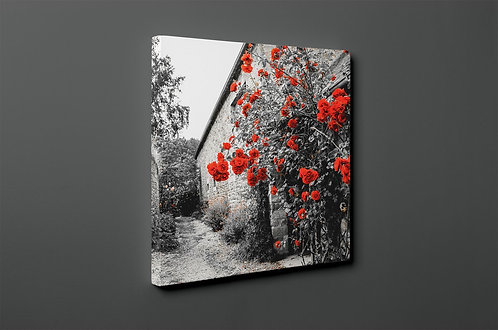 Red Roses Canvas Printings