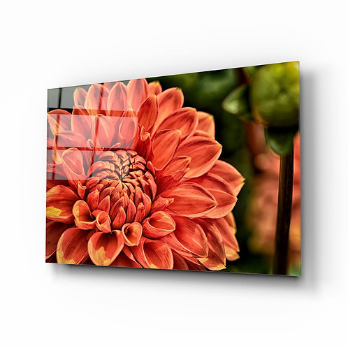 Orange Gerbera Glass Printing