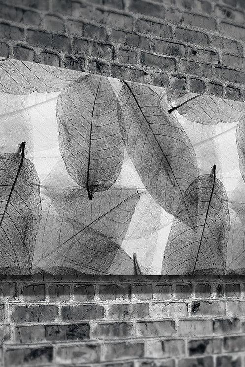 Leaves  Canvas Printings