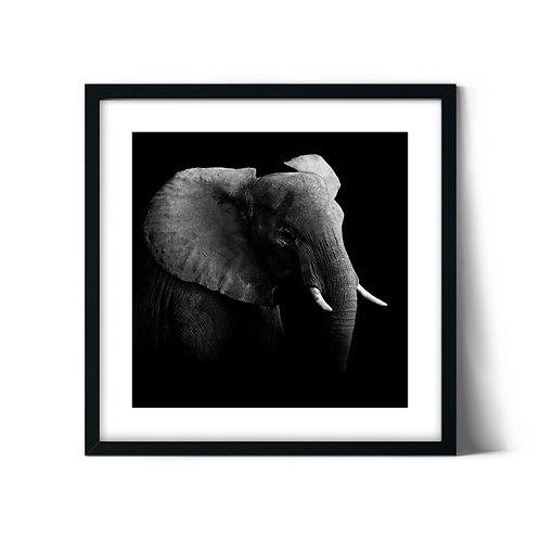 Elephant Framed Painting