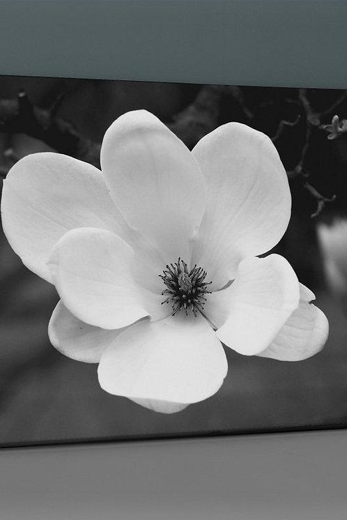 Plum Blossom Canvas Printings