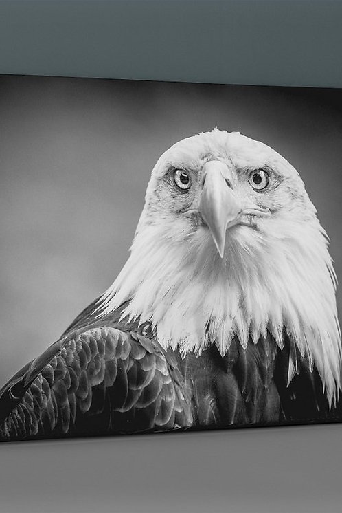 Bald Eagle Canvas Printings
