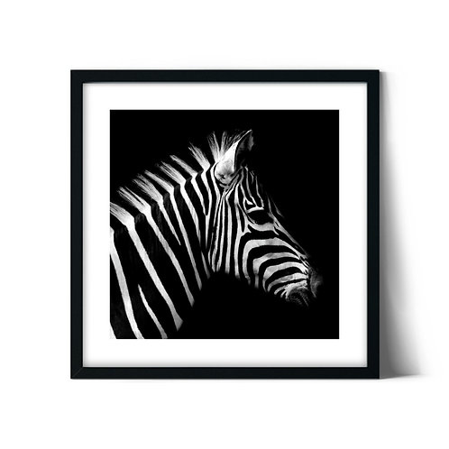 Zebra Framed Painting