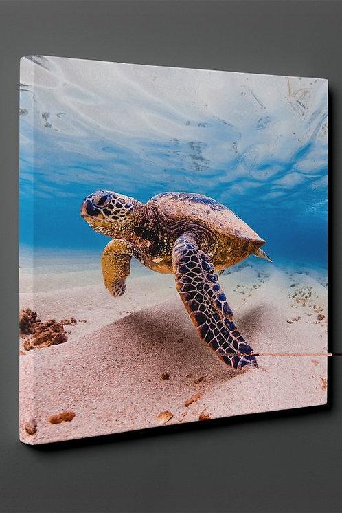 Sea ??Turtle Canvas Printings