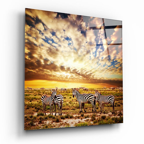 Zebras the UV Printed Glass Printing