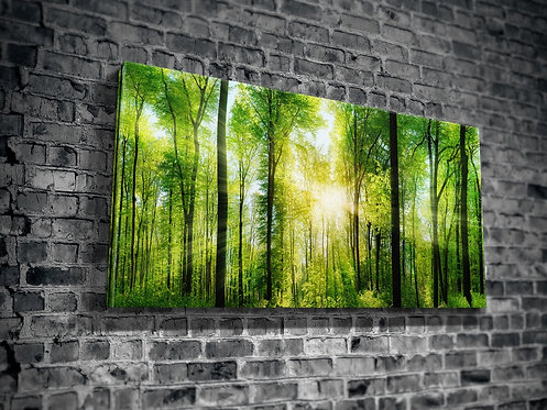 Forest  Canvas Printings