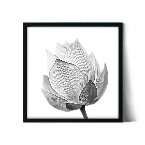 Gray Tulip Framed Painting