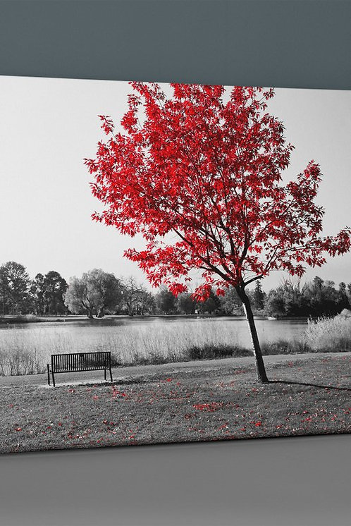 Red Tree Canvas Printings
