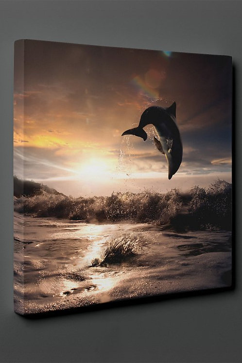Dolphin Canvas Printings