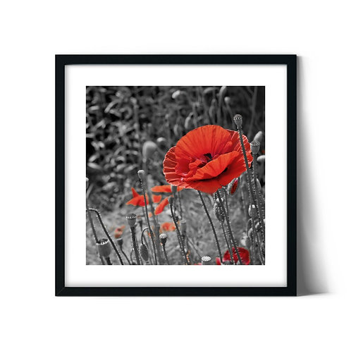 Poppy Framed Painting