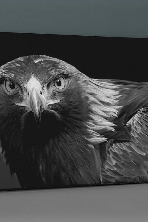 Eagle Canvas Printings