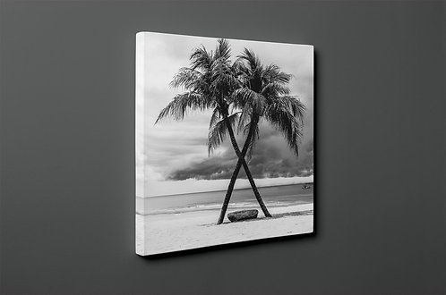 Palm Canvas Printings