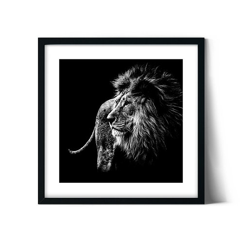 Lion Framed Painting