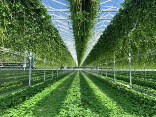 Flevoplant: investeren in rassen en klanten