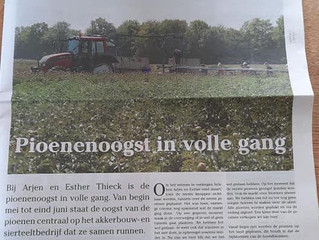 Pioenenoogst in volle gang - coverstory