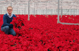 Kas bij Kwekerij Baas in Ens kleurt rood