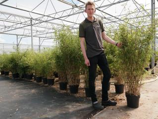 Boomkwekerij J.P. van Straalen in Luttelgeest groeit in bamboeteelt