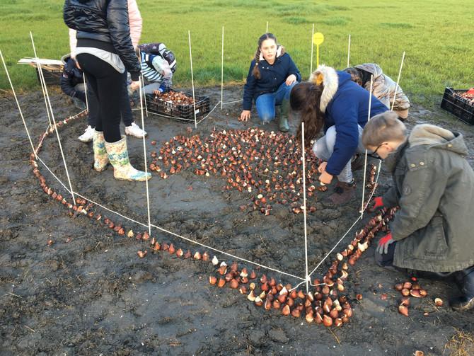 Leerlingen planten 5.000 bollen