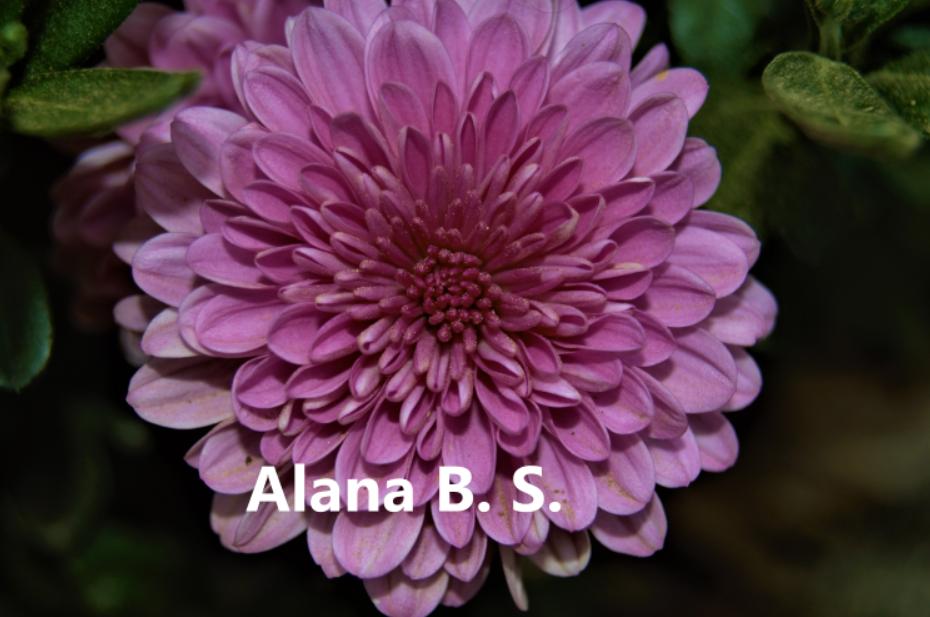 AlanaBS_flowermum.PNG