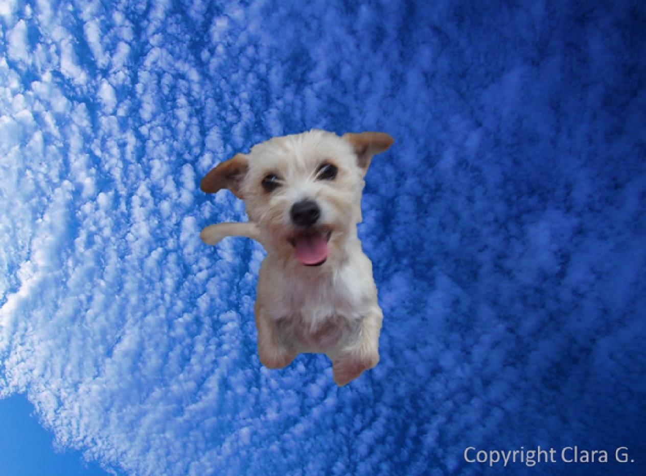 ClaraG_Final Puppy in the Sky.JPG