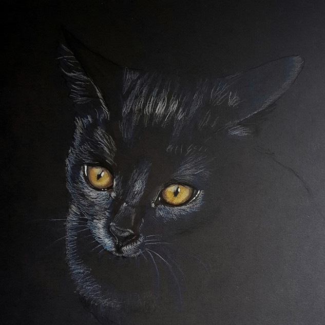 Sleek black cat
