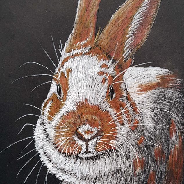 Spotty bunny
