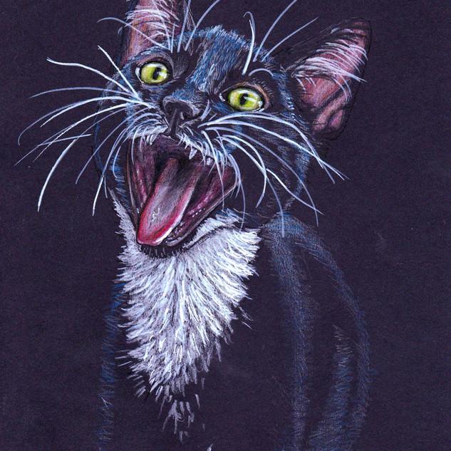 A very vocal kitten
