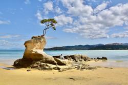 Tinline Bay - Abel Tasman National Park (South Island)