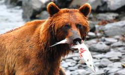 Adventure: Bear Encounter