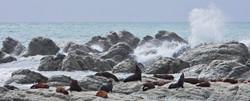 Kaikoura Peninsula - Kean Point (South Island)