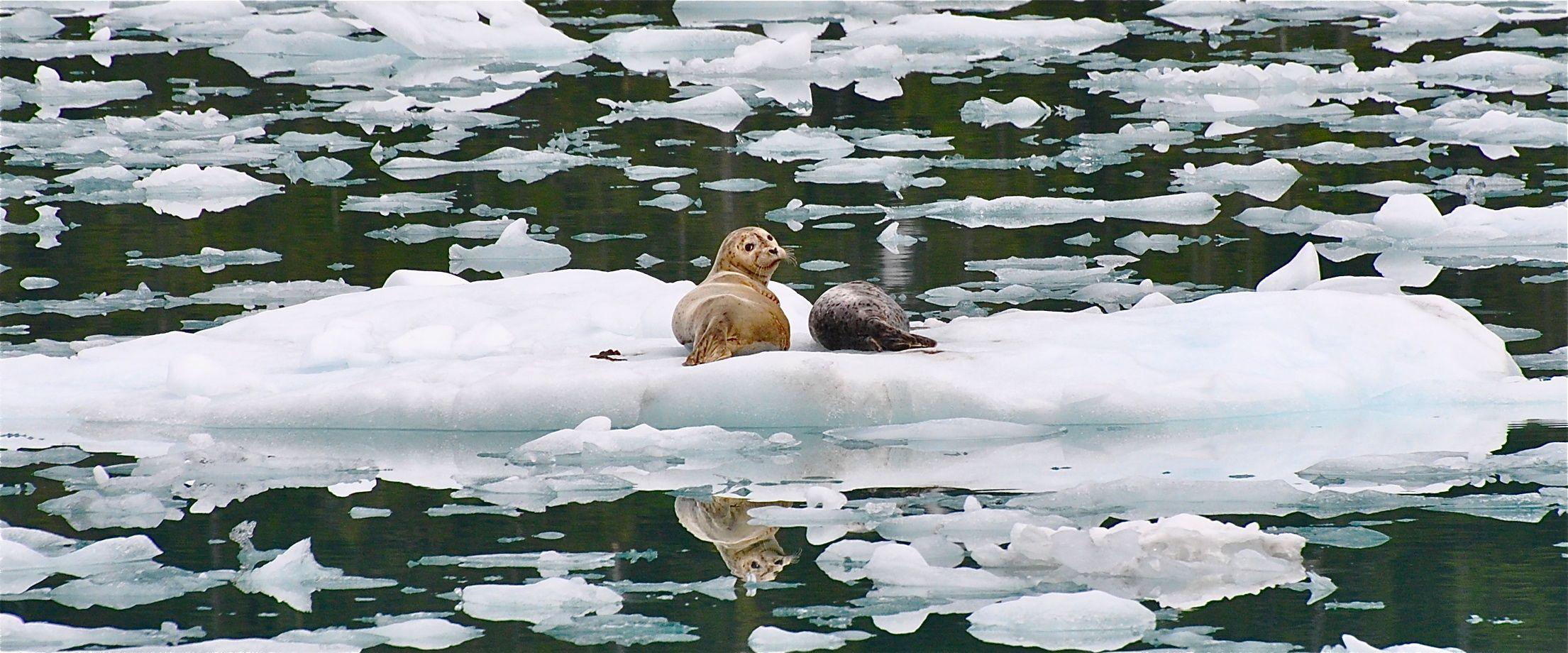 Alaska Marine Wildlife