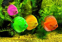 Colorful Fish