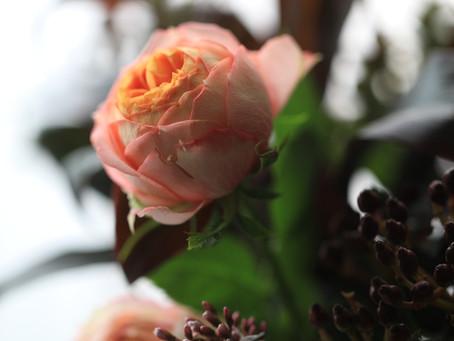 ばら、バラ、薔薇 ?