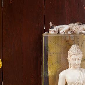 Trucs et astuces : Thaïlande