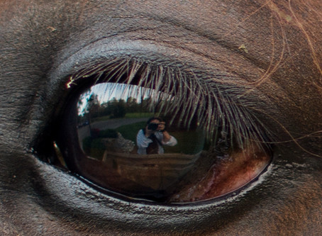 A horse's eye: reflections on reflecting