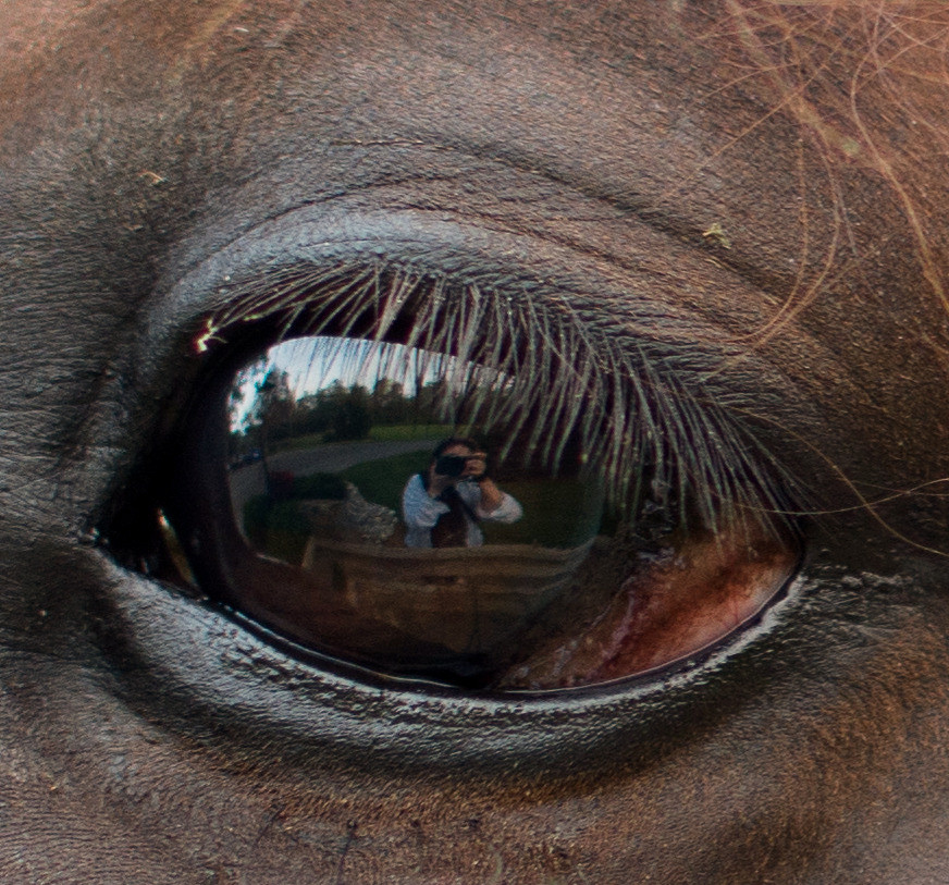 Closeup of horse's eye with reflection of photographer