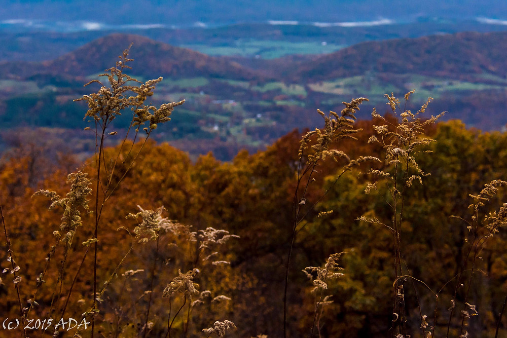 Fall vista from Skyline Drive in Virginia