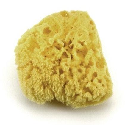 Bath Sea Sponge