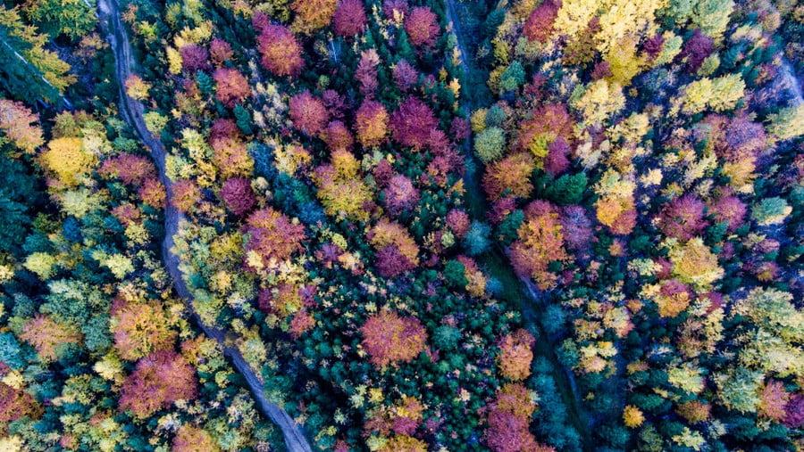 Harale, Romania Dronestagram_Alpa Ilyes.