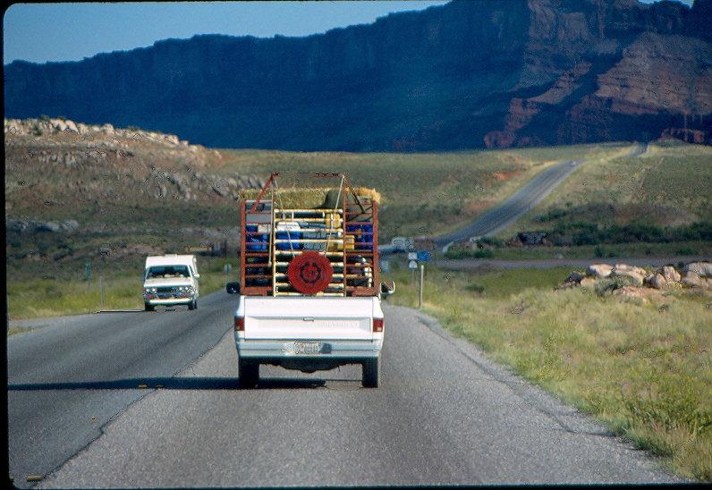 navajo sheep project, navajo, sheep,