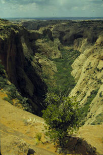 Navajo Canyon, near Inscription House, AZ, where Doc McNeal was able to find a beautiful Navajo-Churro ewe at the bottom of the Canyon in 1985.
