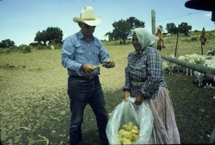 Doc evaluating fleece of Mrs. Charlie's near Chilchinbitoh, AZ in 1980.
