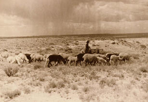 Navajo-Churro sheep flock east of Newcomb, NM, ca 1934.