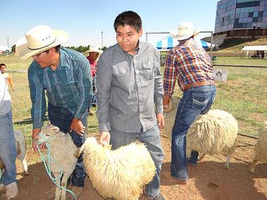 sheep is life, churro sheep, navajo